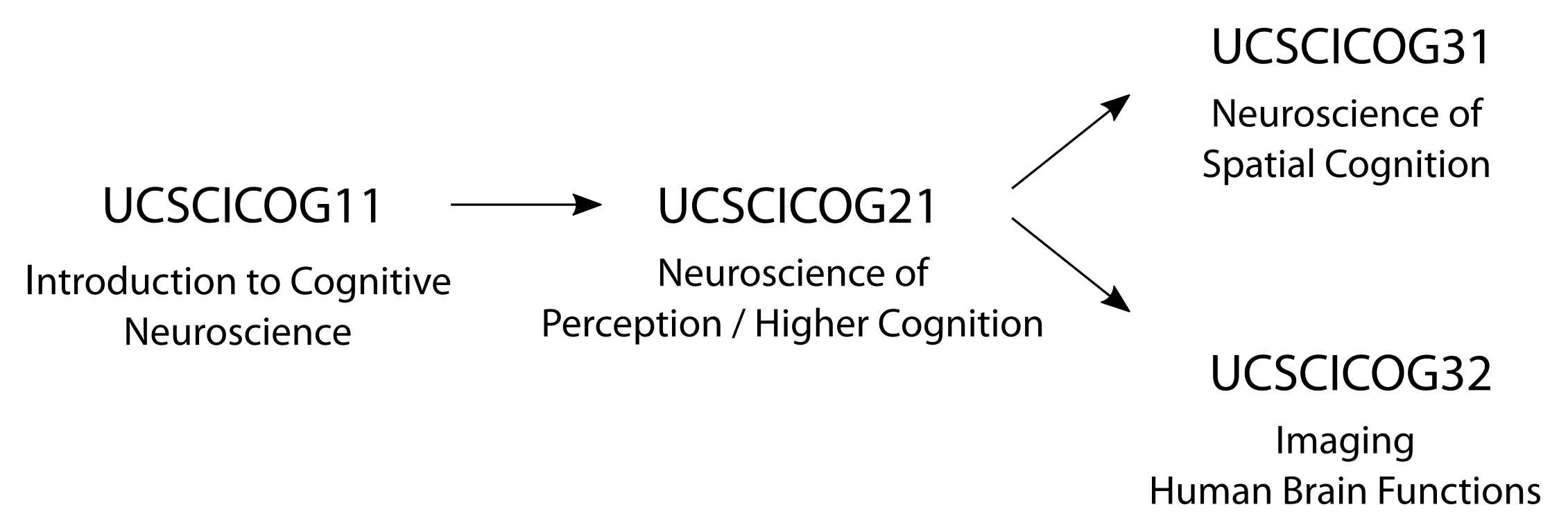 Cognitive Neuroscience - University College Utrecht
