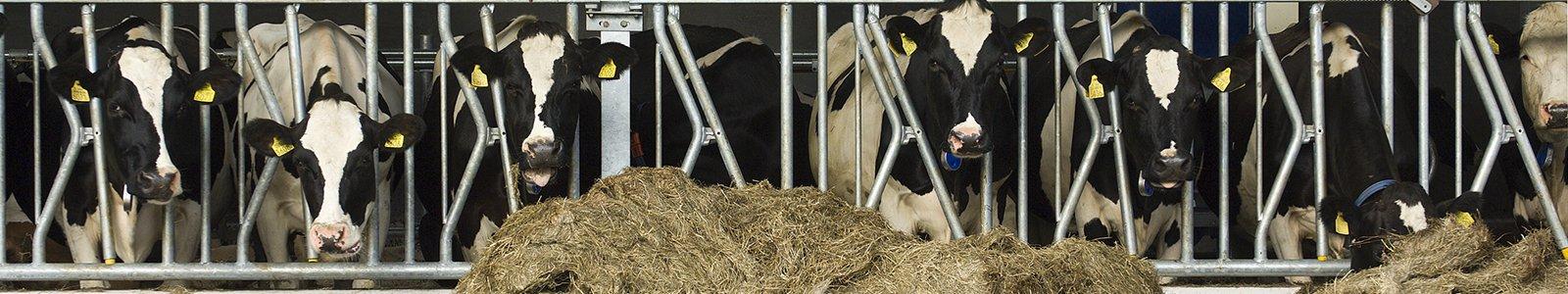 Landbouwhuisdieren